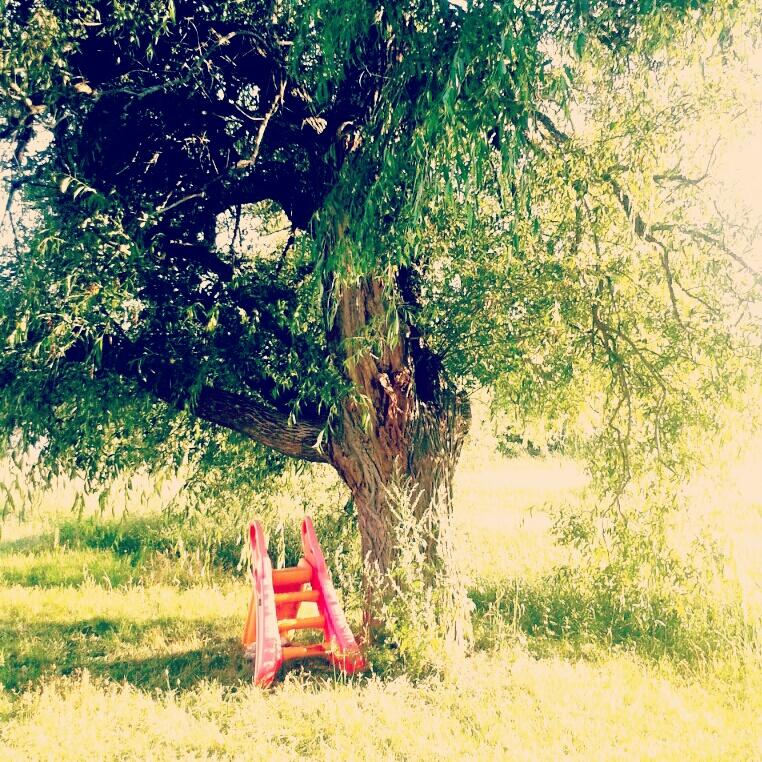 ett magiskt träd